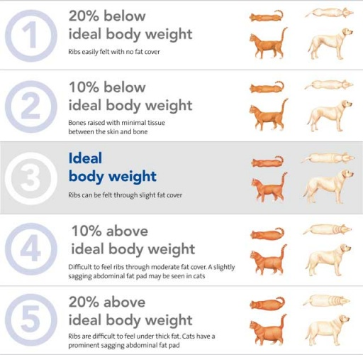 Dog body condition score chart